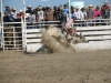 Bull riders at the Crow Fair